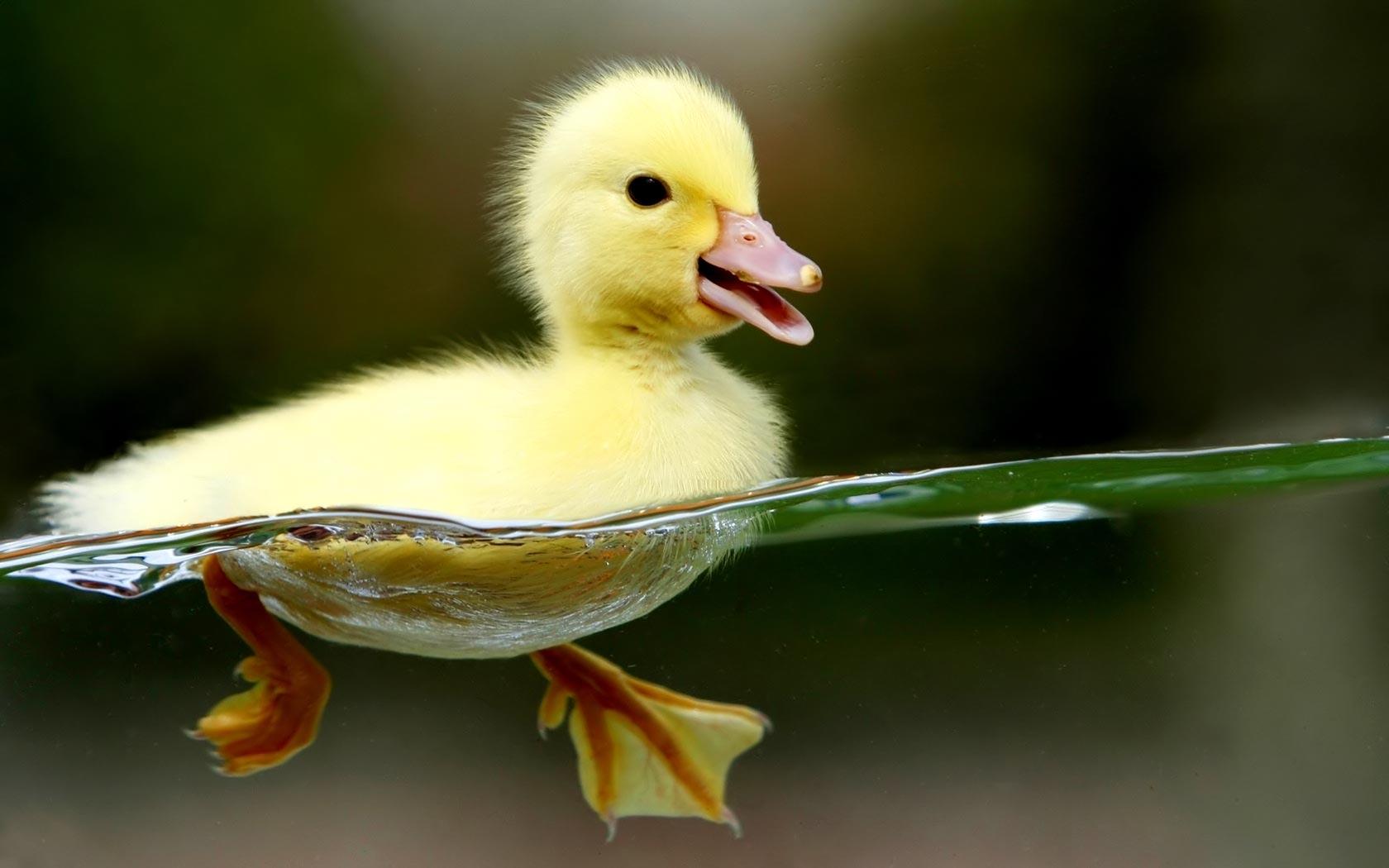14 bellissime immagini di animali ad alta risoluzione for Foto desktop animali