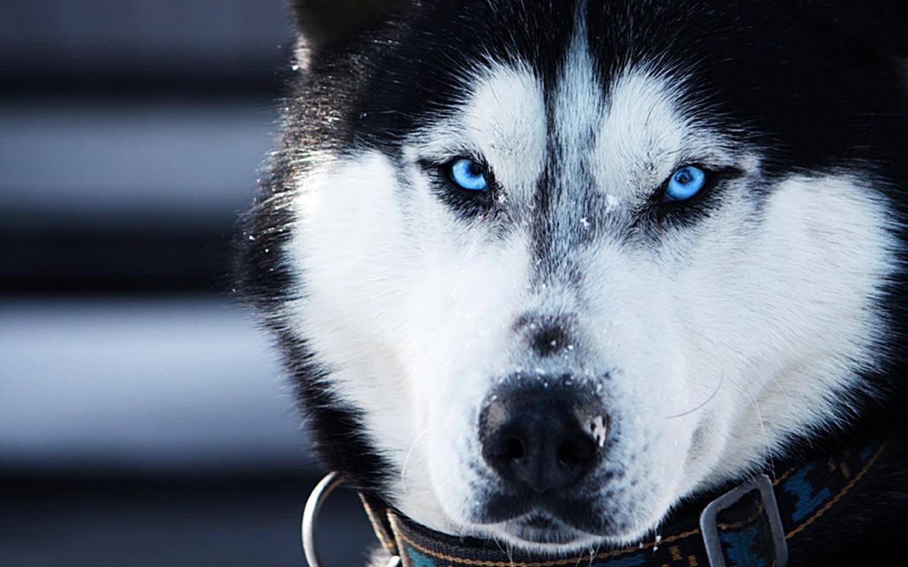 14 bellissime immagini di animali ad alta risoluzione ...