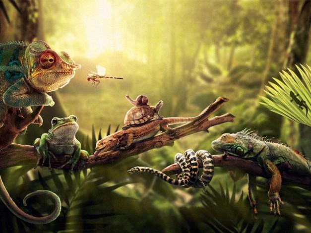 Un suggestivo sfondo hd di natura e animali for Immagini natura hd