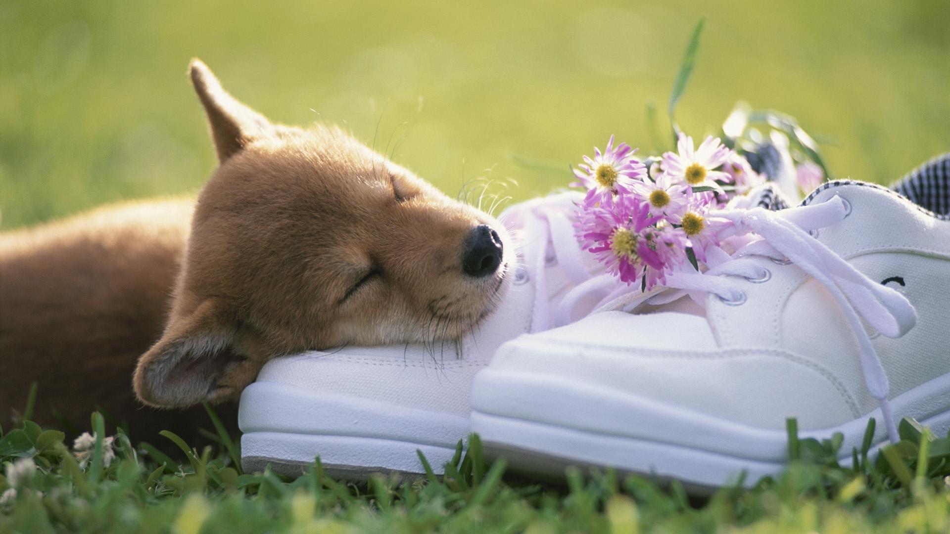 Estremamente 16 tenerissime immagini di cuccioli di cane in alta risoluzione  JG98