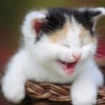 Meow_1920x1080_4e96825275b79