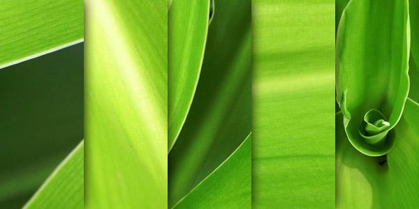 5 texture di foglie verdi ad alta risoluzione (1)