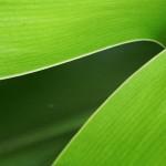 5 texture di foglie verdi ad alta risoluzione (2)