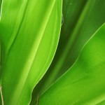 5 texture di foglie verdi ad alta risoluzione (3)
