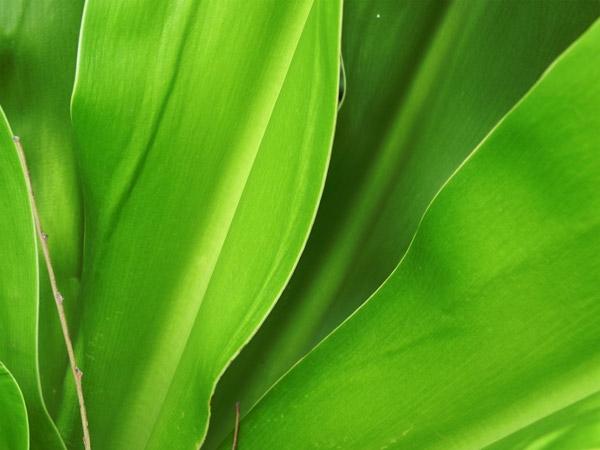 5 Texture Di Foglie Verdi Ad Alta Risoluzione Pixolo It