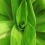 5 texture di foglie verdi ad alta risoluzione (4)