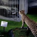 jaguarthumb