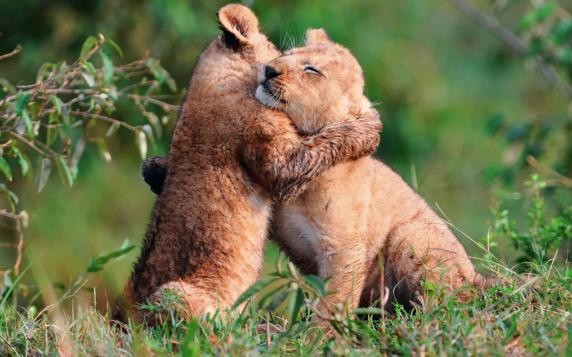 Animals Hd Wallpapers 2015 Funny Kissing Hugging Baby