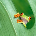 cute-little-frog-2560x1600-wallpaper-9389
