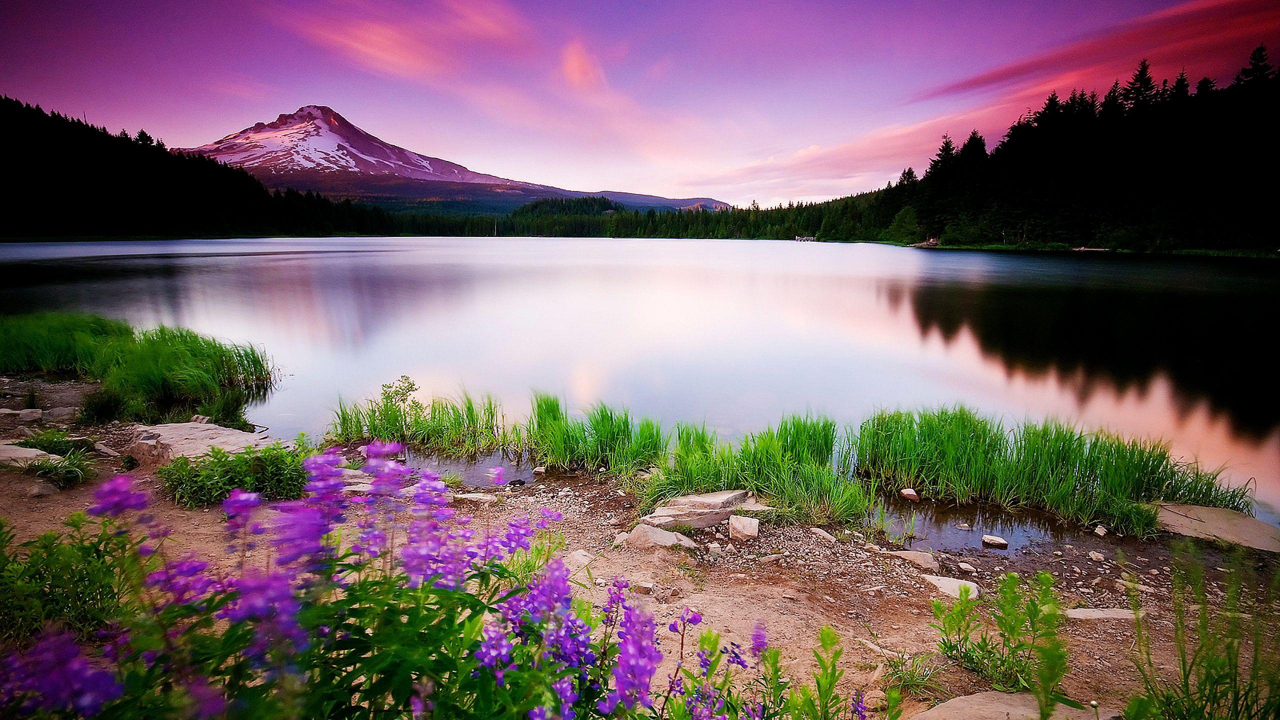 10 fantastici sfondi di natura ad alta risoluzione for Sfondi natura desktop