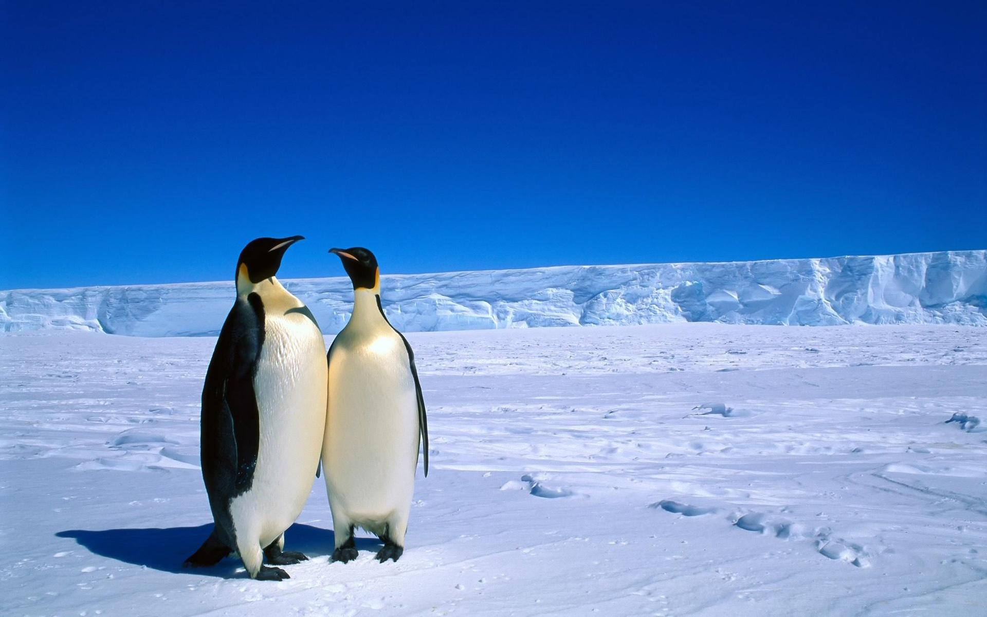 Nuova selezione di 20 bellissime immagini di animali ad for Desktop alta definizione