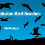 Hi_Res_Bird_Brushes_by_blackbelt777