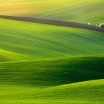 spectacular-green-field-1920x1200-wallpaper-9036