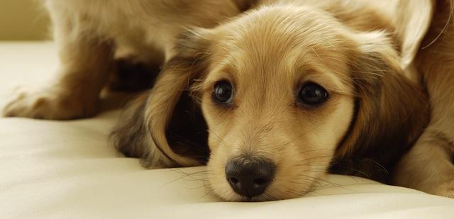 Nuova selezione di 30 fantastiche immagini di animali ad for Foto desktop animali