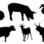 farm animals2